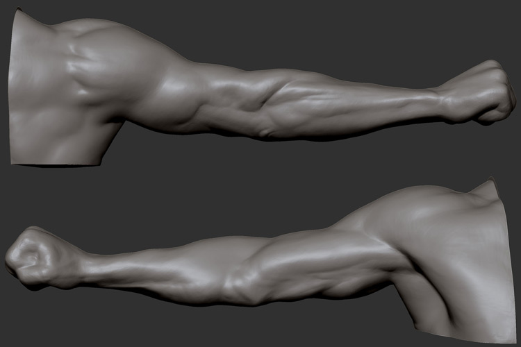 Favorite-arms-3